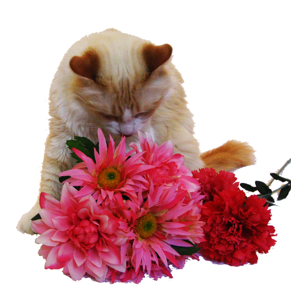 Rupert and pink flowers